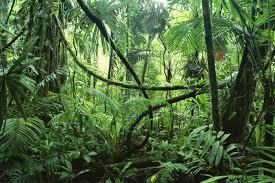 jungle的图片释义。 如果您认为该图片不合适,可以上传新图片来帮助我们改进