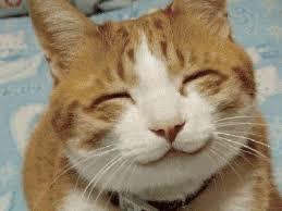 gato的图片释义。 如果您认为该图片不合适,可以上传新图片来帮助我们改进