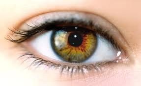 eye的图片释义。 如果您认为该图片不合适,可以上传新图片来帮助我们改进