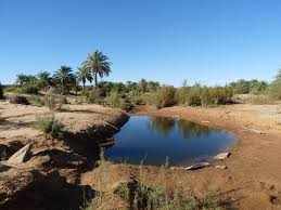 oasis的图片释义。 如果您认为该图片不合适,可以上传新图片来帮助我们改进