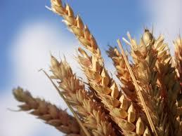 grain的图片释义。 如果您认为该图片不合适,可以上传新图片来帮助我们改进