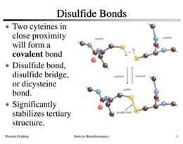 disulfide的图片释义。 如果您认为该图片不合适,可以上传新图片来帮助我们改进