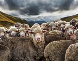 herds的图片释义。 如果您认为该图片不合适,可以上传新图片来帮助我们改进