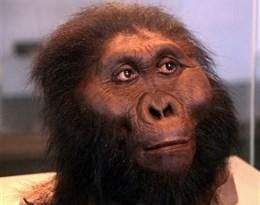 hominids的图片释义。 如果您认为该图片不合适,可以上传新图片来帮助我们改进