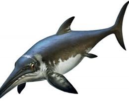 ichthyosaur的图片释义。 如果您认为该图片不合适,可以上传新图片来帮助我们改进