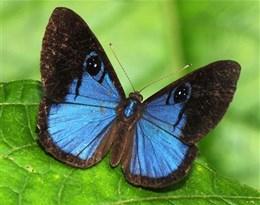 Lycaenidae的图片释义。 如果您认为该图片不合适,可以上传新图片来帮助我们改进