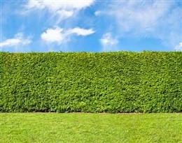 bush的图片释义。 如果您认为该图片不合适,可以上传新图片来帮助我们改进