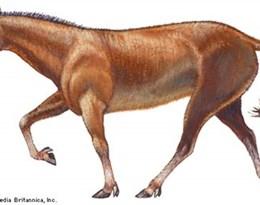 Miohippus的图片释义。 如果您认为该图片不合适,可以上传新图片来帮助我们改进